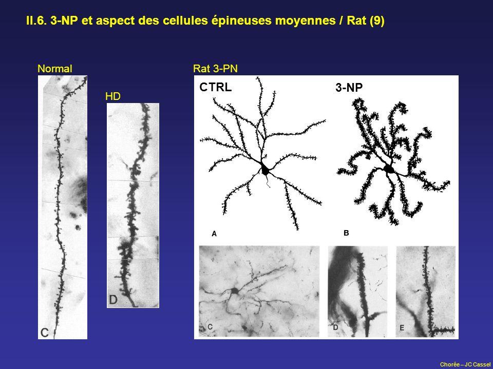 II.6. 3-NP et aspect des cellules épineuses moyennes / Rat (9)