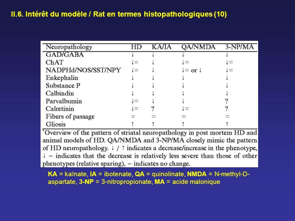 II.6. Intérêt du modèle / Rat en termes histopathologiques (10)