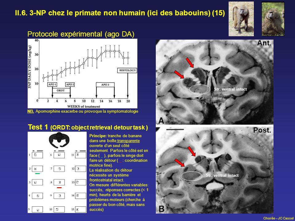 II.6. 3-NP chez le primate non humain (ici des babouins) (15)