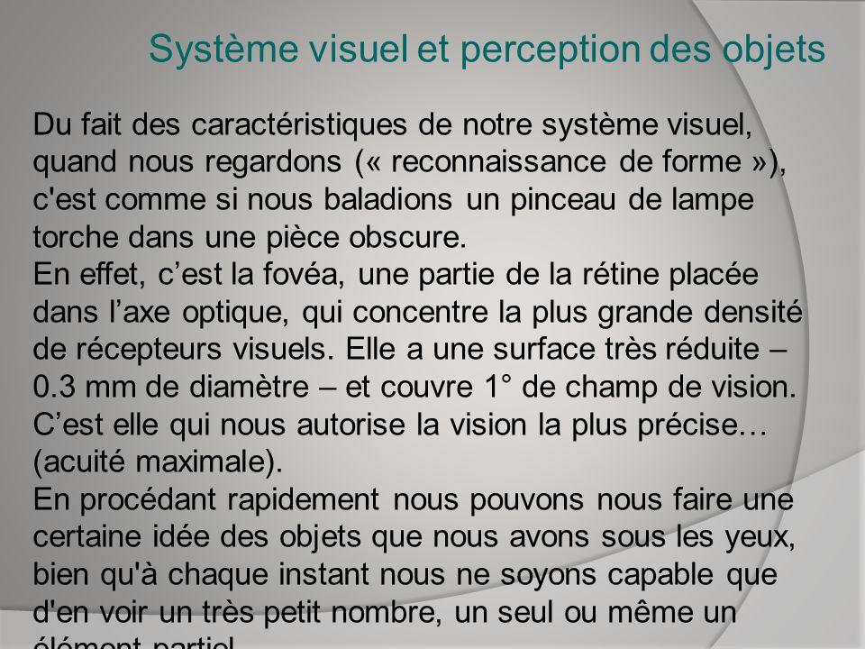 Système visuel et perception des objets