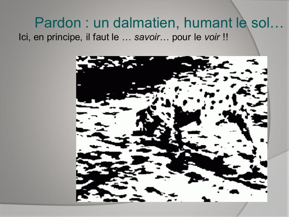 Pardon : un dalmatien, humant le sol…