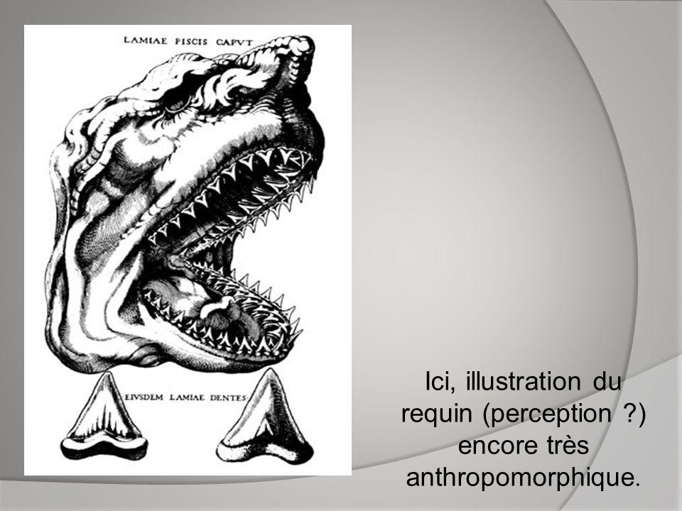 Ici, illustration du requin (perception
