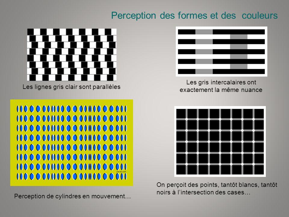 Perception des formes et des couleurs