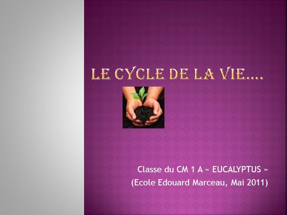 Classe du CM 1 A « EUCALYPTUS » (Ecole Edouard Marceau, Mai 2011)