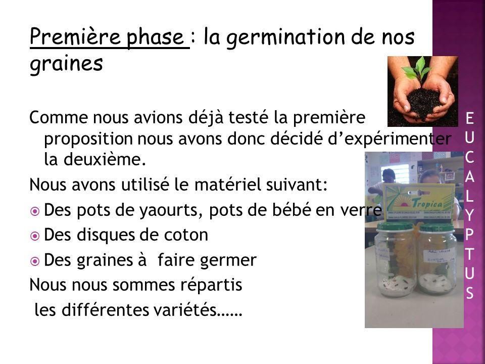Première phase : la germination de nos graines
