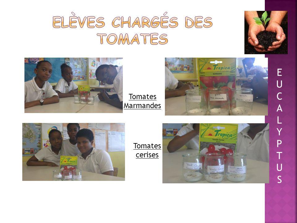 Elèves chargés des tomates