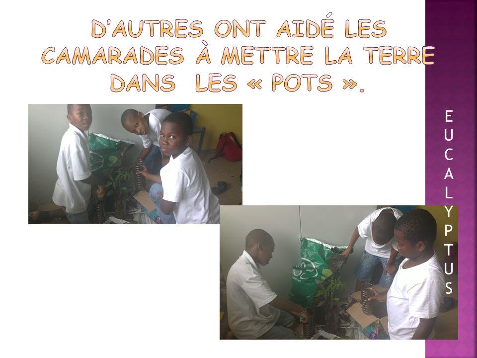 D'autres ont aidé les camarades à mettre la terre dans les « pots ».