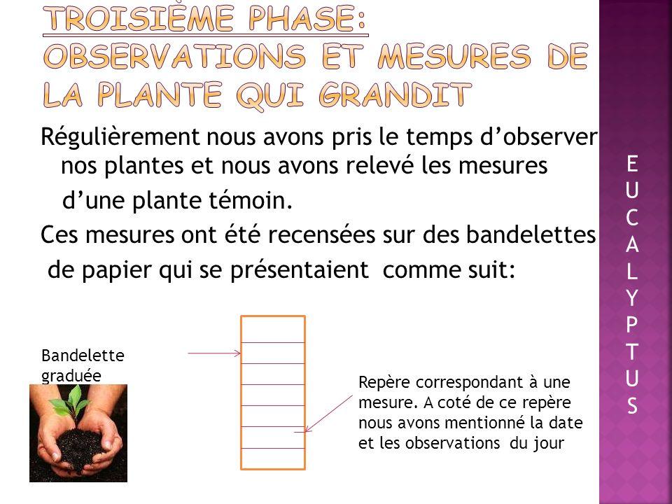Troisième phase: observations et mesures de la plante qui grandit