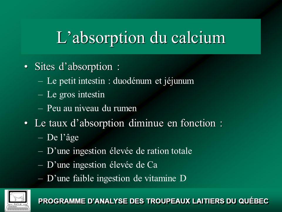 L'absorption du calcium