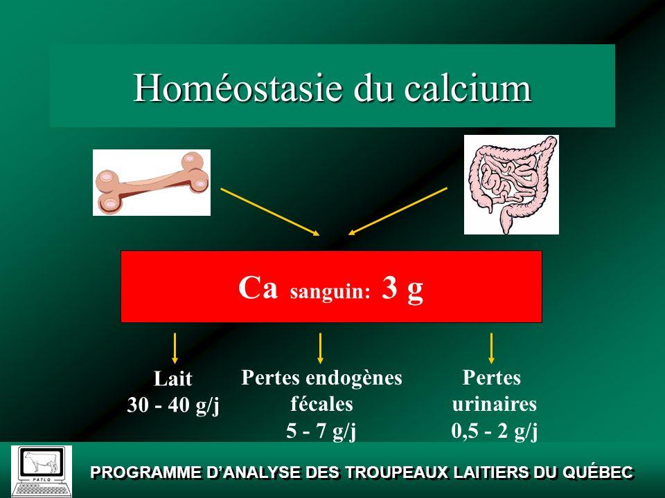 Homéostasie du calcium