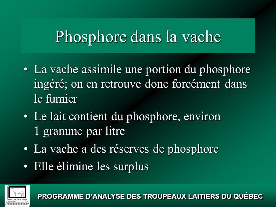 Phosphore dans la vache