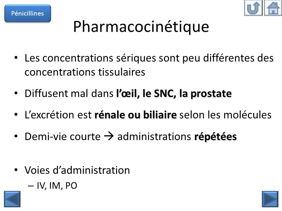 Pénicillines Pharmacocinétique. Les concentrations sériques sont peu différentes des concentrations tissulaires.