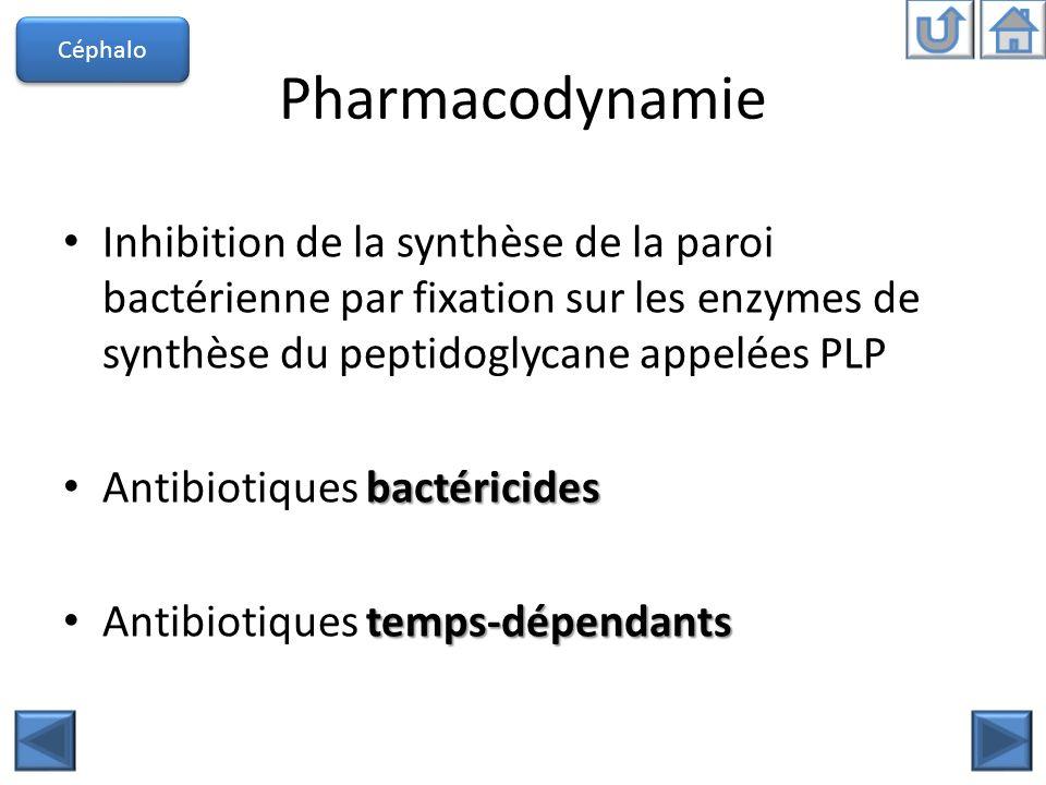 Céphalo Pharmacodynamie. Inhibition de la synthèse de la paroi bactérienne par fixation sur les enzymes de synthèse du peptidoglycane appelées PLP.