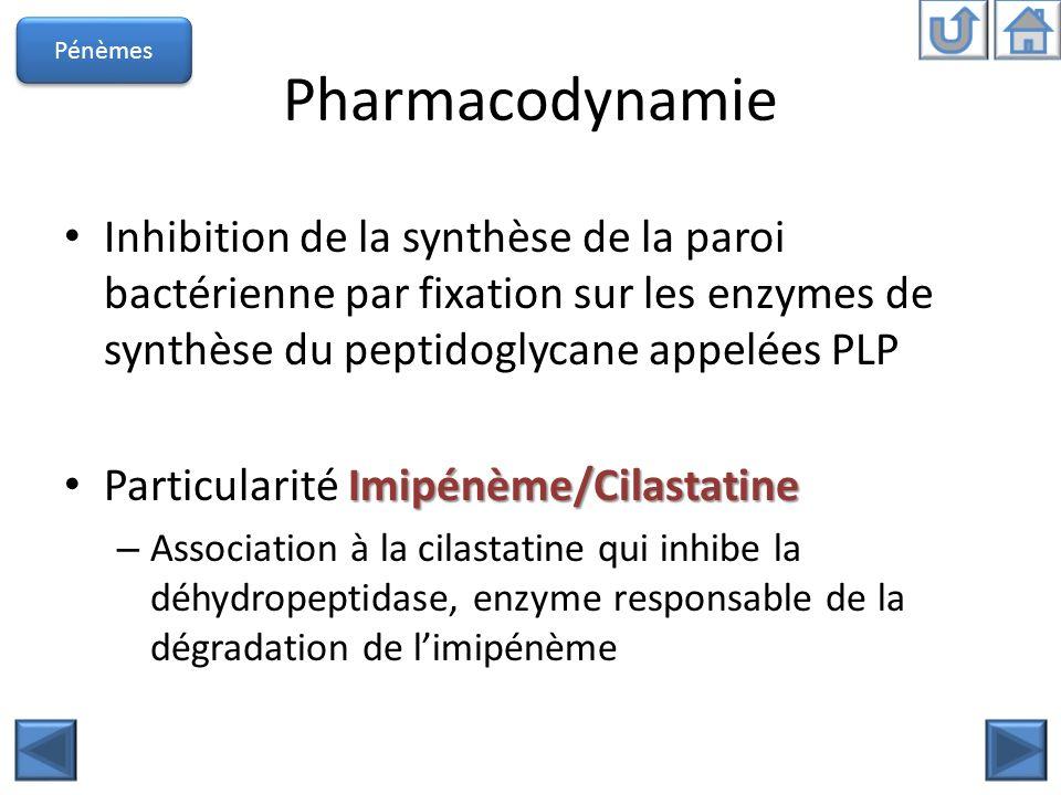 Pénèmes Pharmacodynamie. Inhibition de la synthèse de la paroi bactérienne par fixation sur les enzymes de synthèse du peptidoglycane appelées PLP.