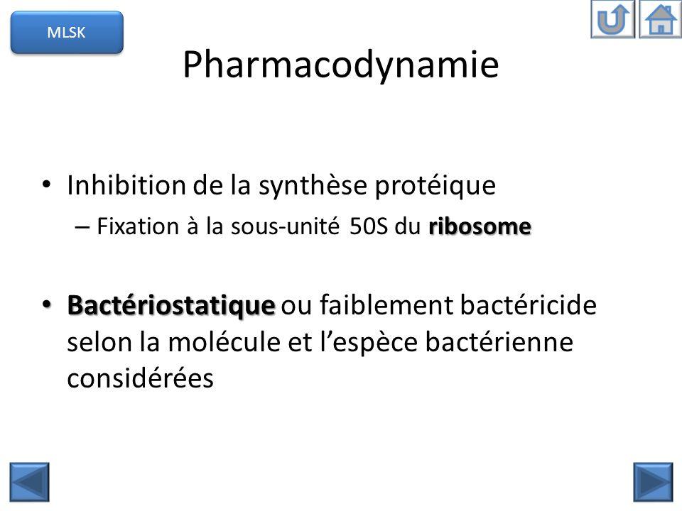 Pharmacodynamie Inhibition de la synthèse protéique