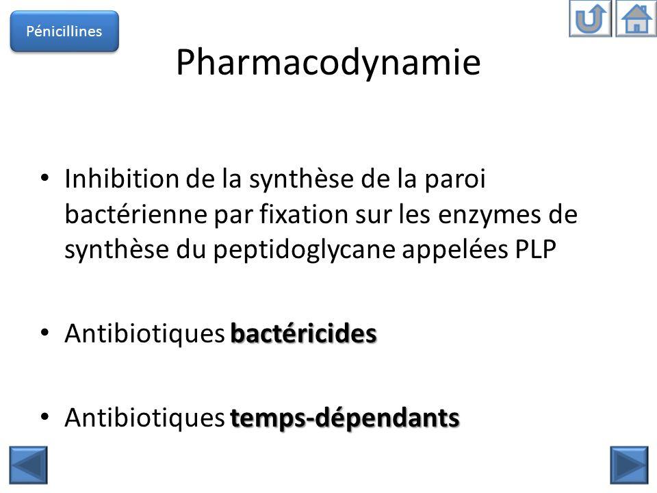 Pénicillines Pharmacodynamie.