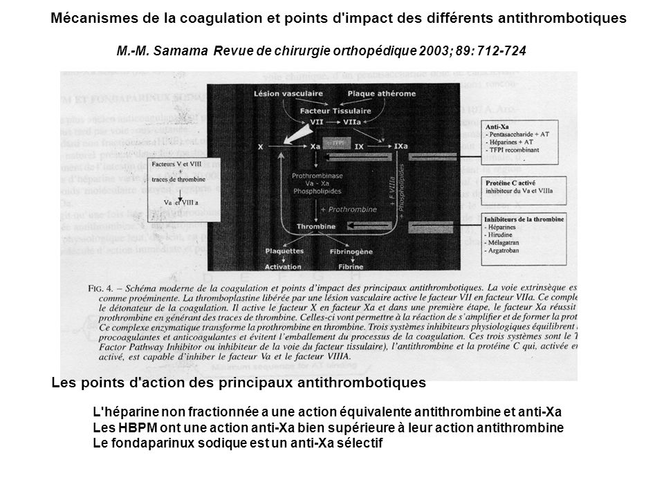 Les points d action des principaux antithrombotiques