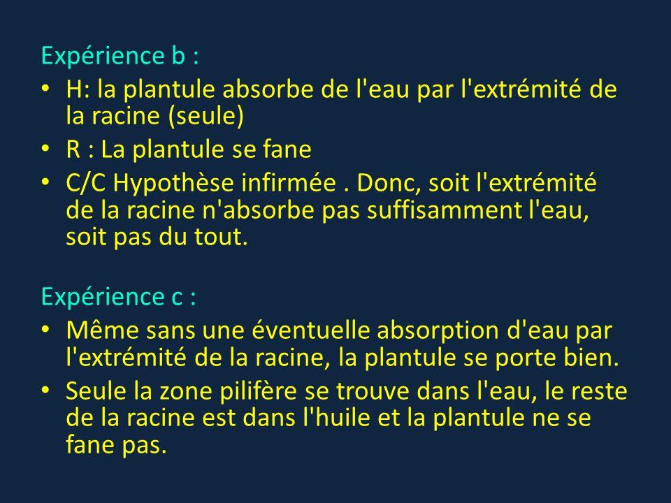 Expérience b : H: la plantule absorbe de l eau par l extrémité de la racine (seule) R : La plantule se fane.