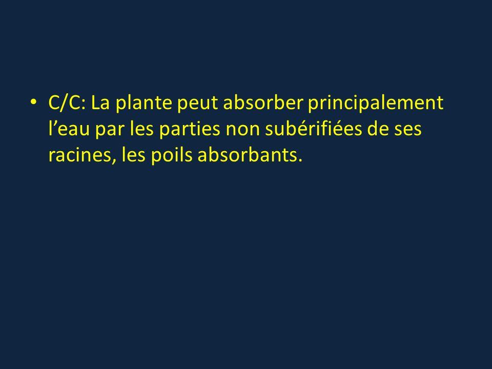 C/C: La plante peut absorber principalement l'eau par les parties non subérifiées de ses racines, les poils absorbants.