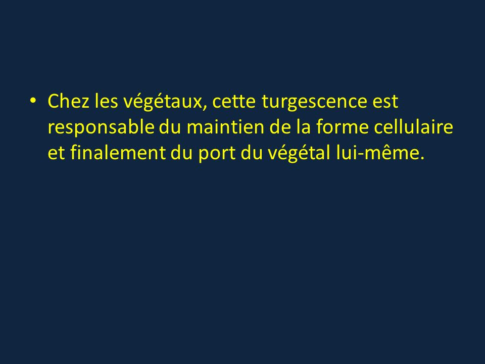 Chez les végétaux, cette turgescence est responsable du maintien de la forme cellulaire et finalement du port du végétal lui-même.