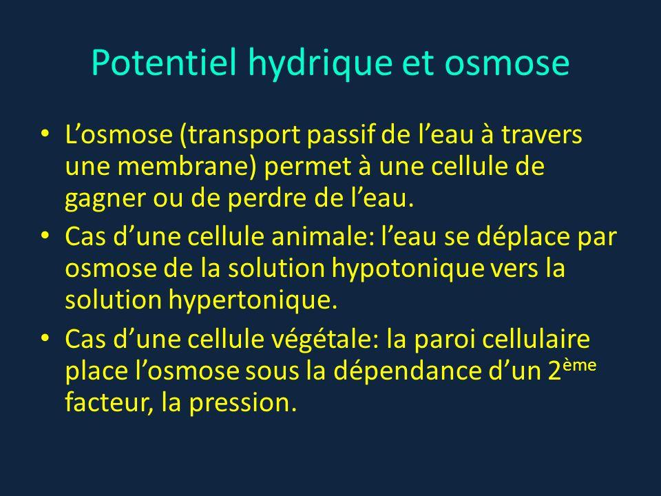 Potentiel hydrique et osmose