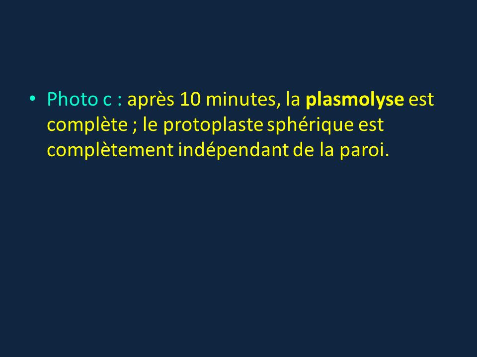 Photo c : après 10 minutes, la plasmolyse est complète ; le protoplaste sphérique est complètement indépendant de la paroi.