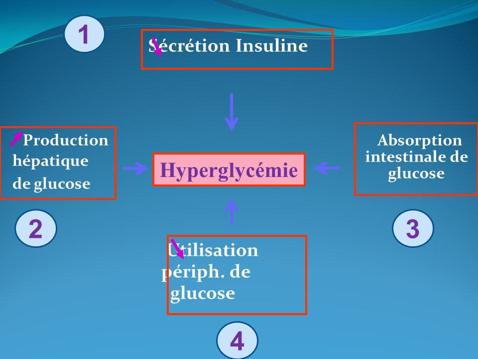 Absorption intestinale de glucose