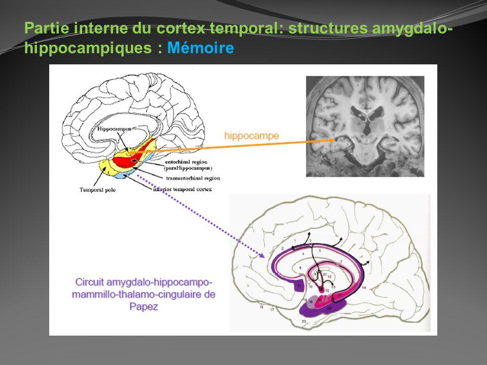 Partie interne du cortex temporal: structures amygdalo-hippocampiques : Mémoire