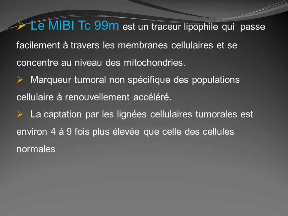 Le MIBI Tc 99m est un traceur lipophile qui passe facilement à travers les membranes cellulaires et se concentre au niveau des mitochondries.