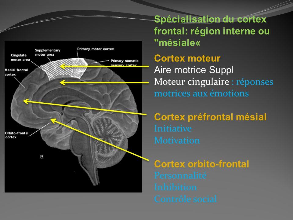 Spécialisation du cortex frontal: région interne ou mésiale«