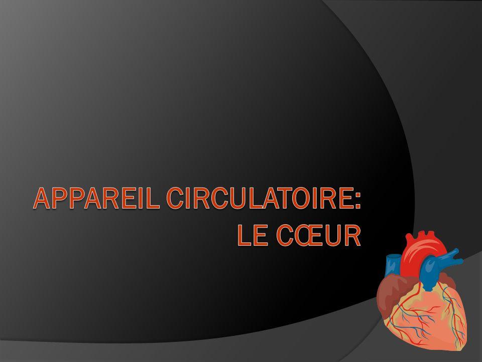 Appareil circulatoire: Le Cœur