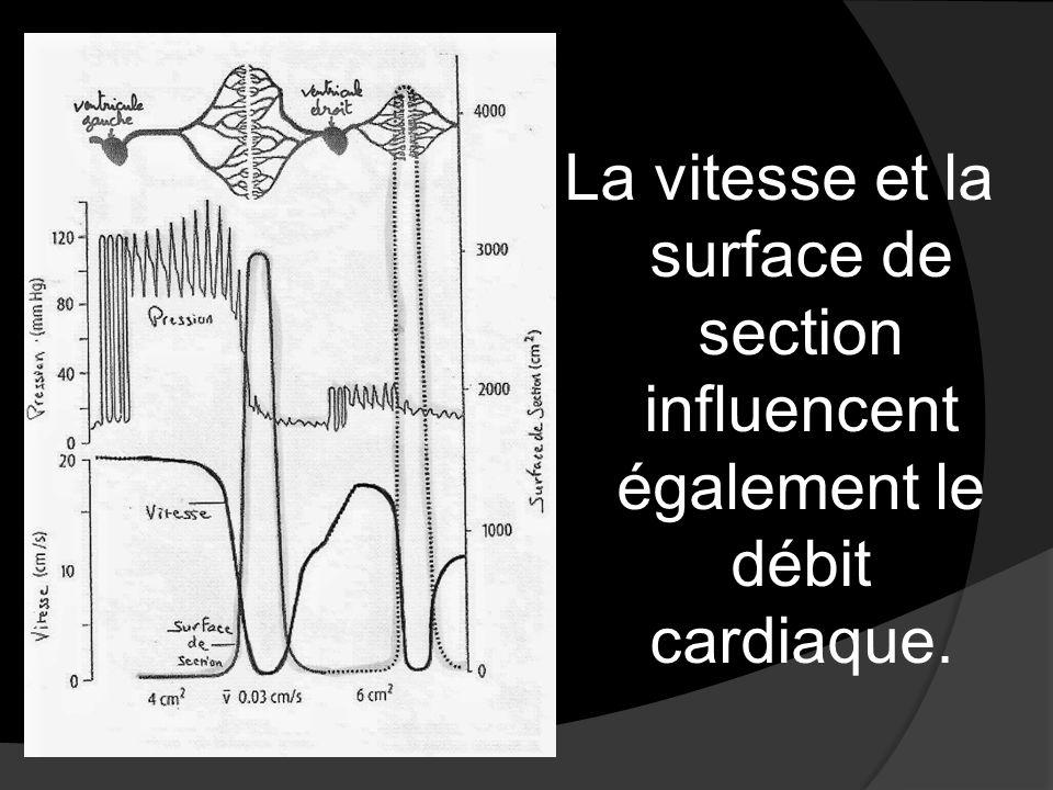La vitesse et la surface de section influencent également le débit cardiaque.