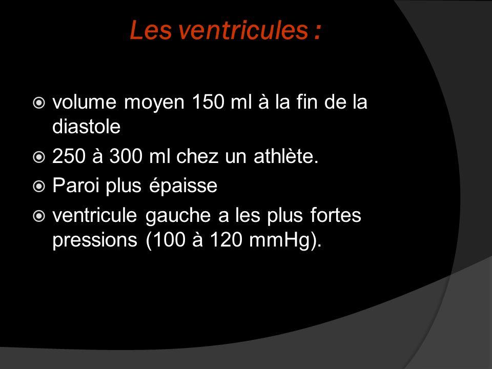 Les ventricules : volume moyen 150 ml à la fin de la diastole