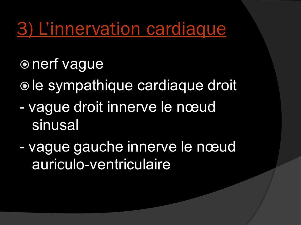 3) L'innervation cardiaque