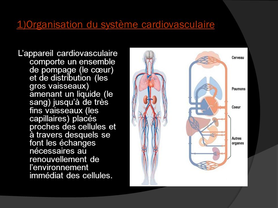 1)Organisation du système cardiovasculaire