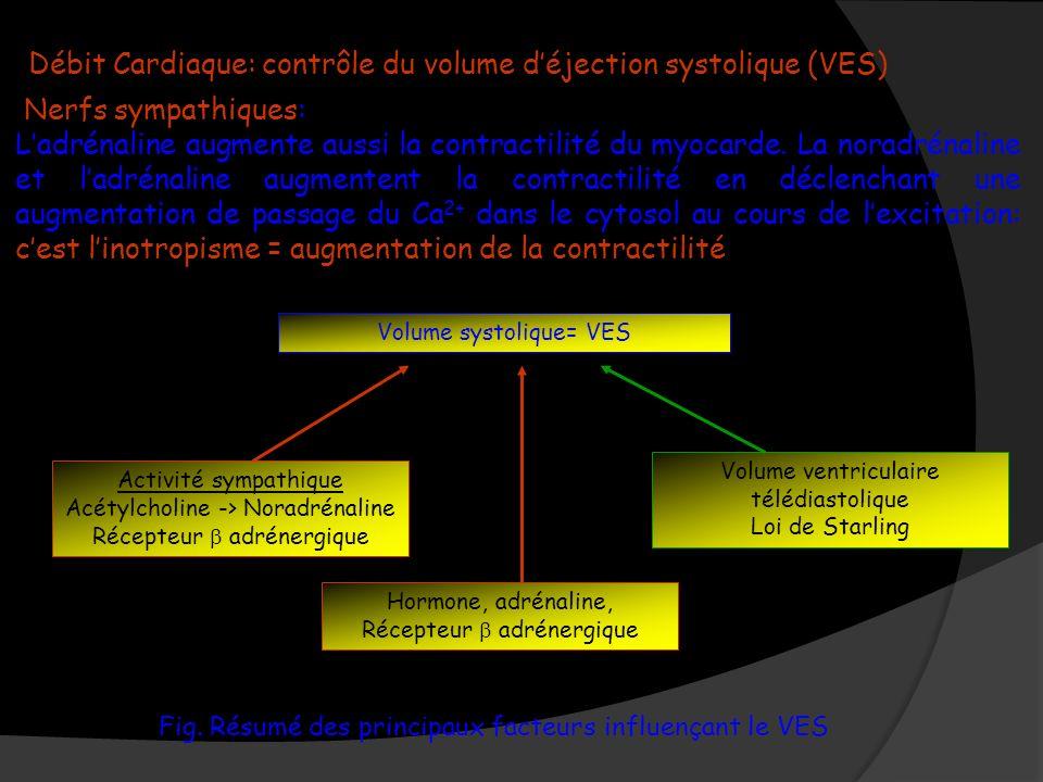 Débit Cardiaque: contrôle du volume d'éjection systolique (VES)