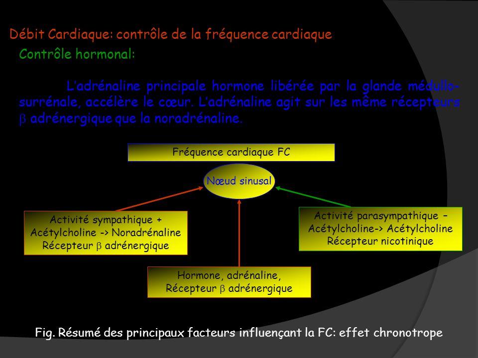 Débit Cardiaque: contrôle de la fréquence cardiaque