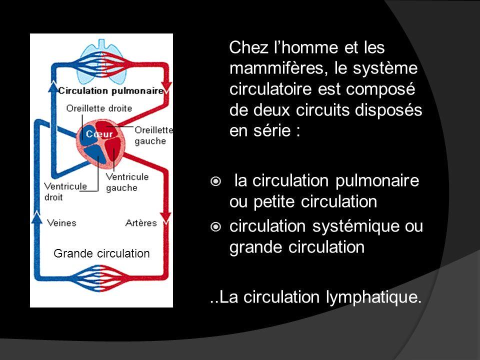 la circulation pulmonaire ou petite circulation