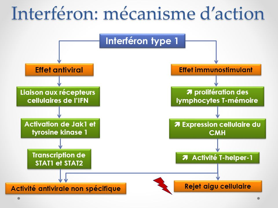 Interféron: mécanisme d'action