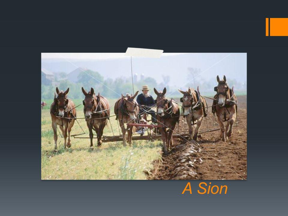 Voici pour conclure ou nous en sommes dans mes montagnes à Sion avec nos SixMûles