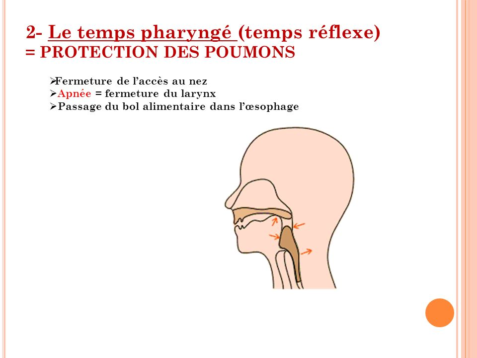 2- Le temps pharyngé (temps réflexe) = PROTECTION DES POUMONS
