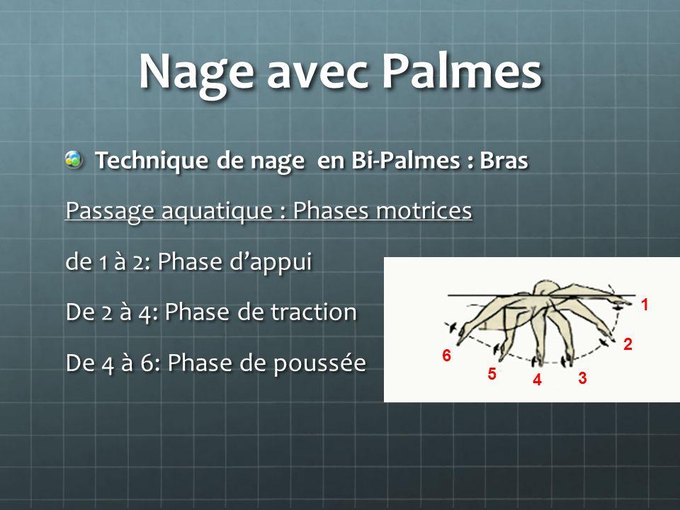 Nage avec Palmes Technique de nage en Bi-Palmes : Bras