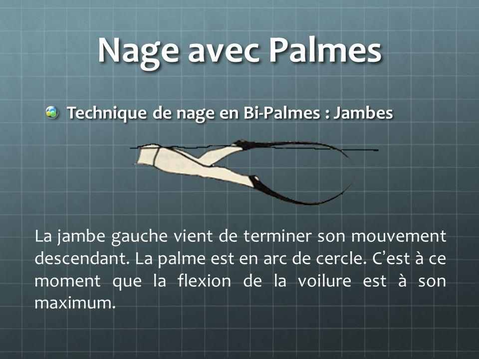 Nage avec Palmes Technique de nage en Bi-Palmes : Jambes