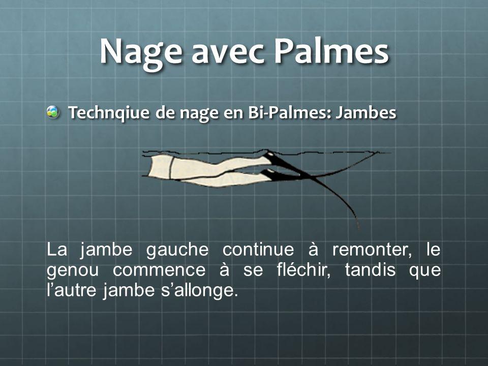 Nage avec Palmes Technqiue de nage en Bi-Palmes: Jambes
