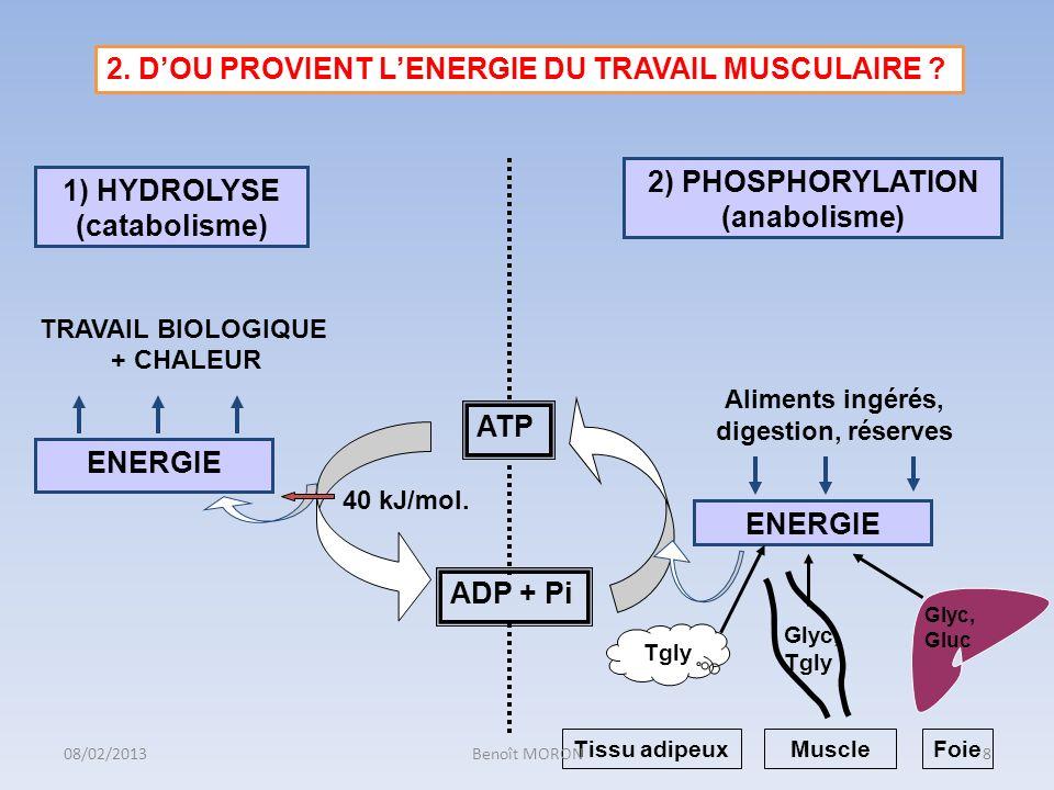 2. D'OU PROVIENT L'ENERGIE DU TRAVAIL MUSCULAIRE
