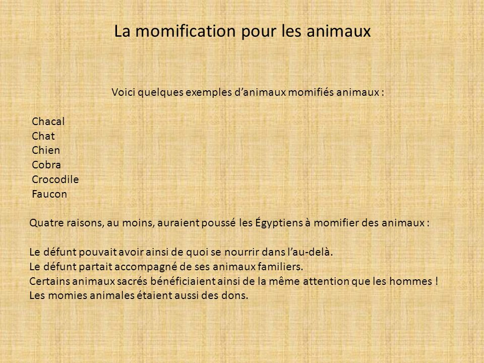 La momification pour les animaux