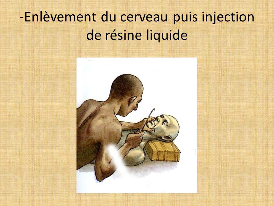 -Enlèvement du cerveau puis injection de résine liquide