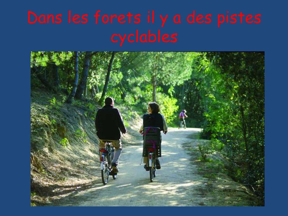 Dans les forets il y a des pistes cyclables