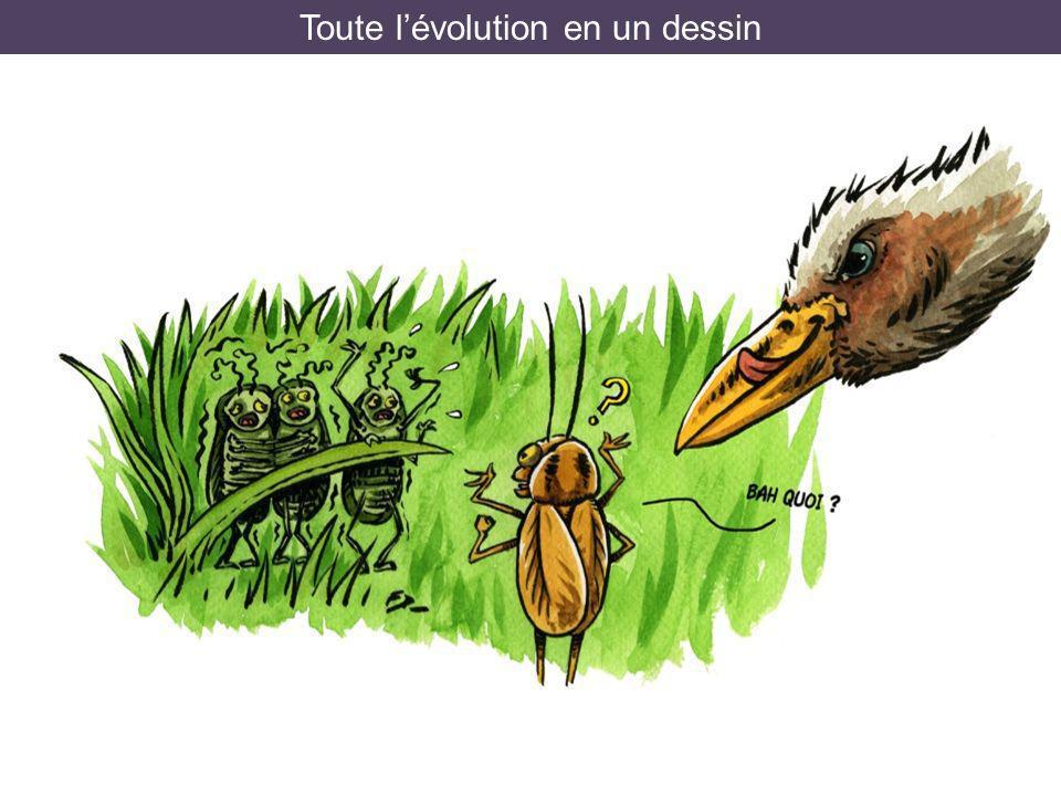 Toute l'évolution en un dessin