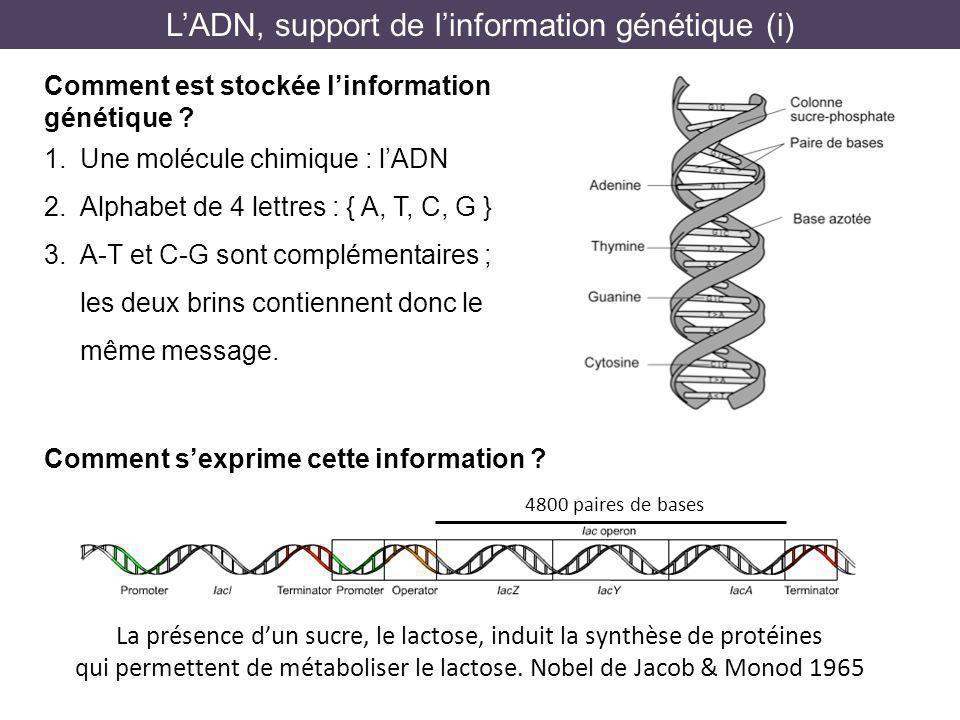L'ADN, support de l'information génétique (i)